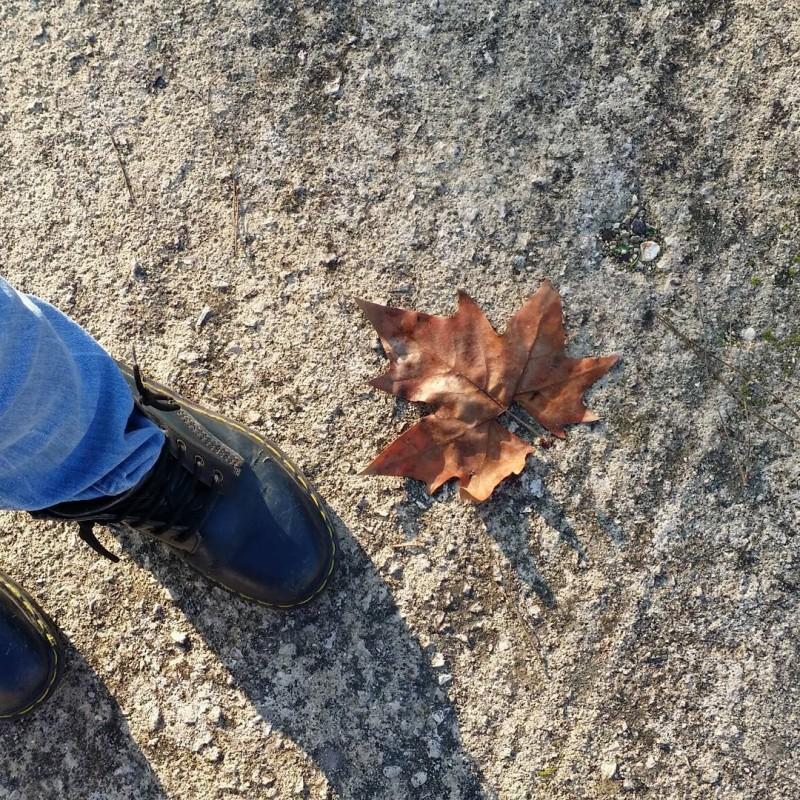 Ancora un pezzetto di autunno nelle mie passeggiate mattutine buongiornohellip