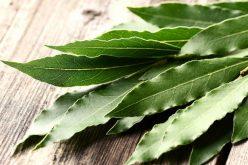 Bruciare foglie di alloro per un effetto calmante