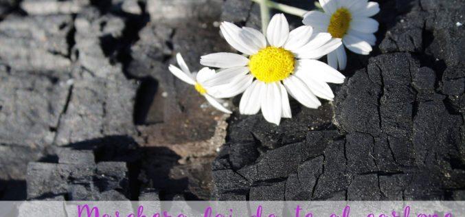 Maschera fai da te al carbone per eliminare i punti neri
